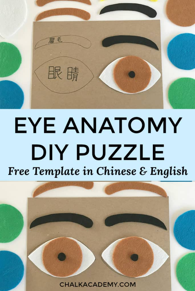 Eye anatomy DIY puzzle for kids - free printable template in Chinese and English