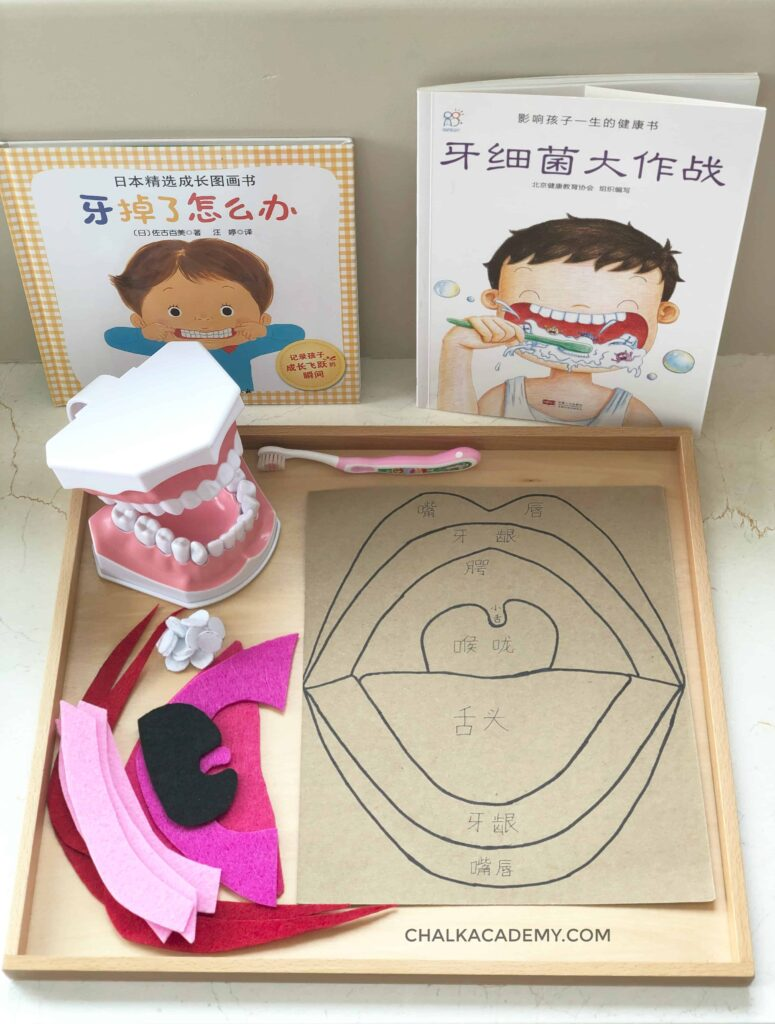 DIY mouth puzzle, dental model, and Chinese books about teethbrushing