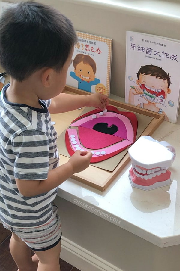 Boy playing with mouth anatomy puzzle, dental model, Chinese books about teeth brushing