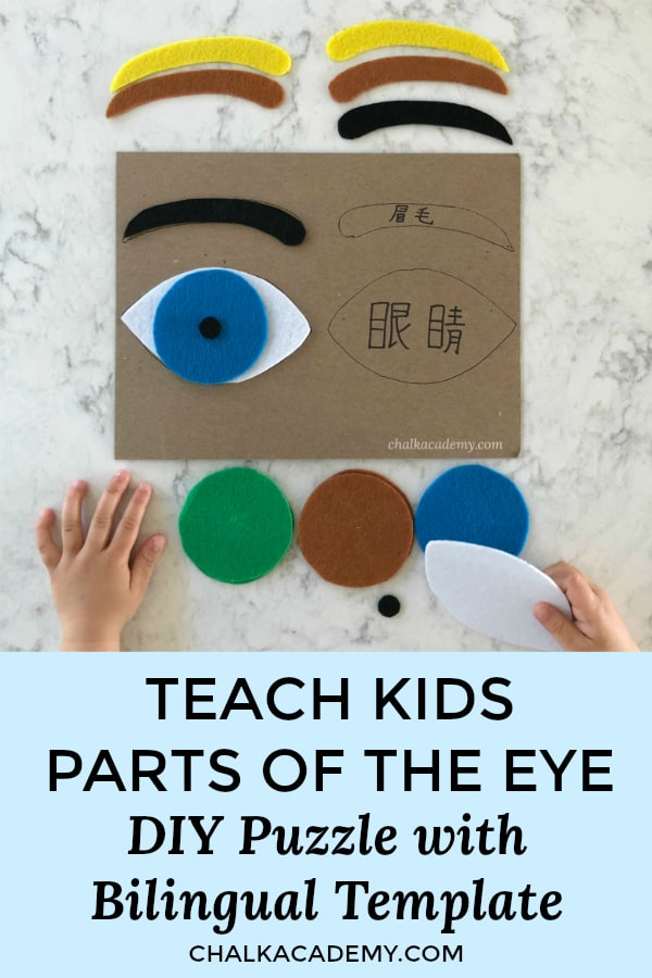 Parts of the eye puzzle - bilingual Chinese/English template