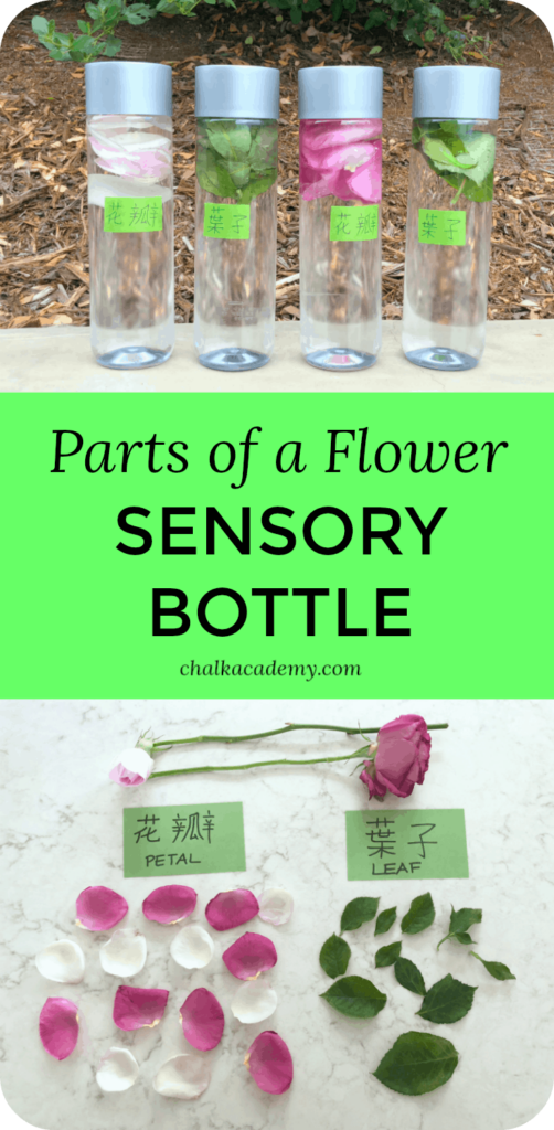 Parts of a flower sensory bottles