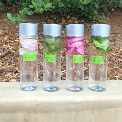 Parts of a Flower Sensory Bottles – A Nature Literacy Activity
