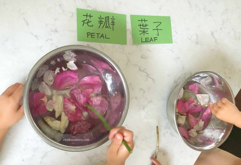 Sorting leaves and flower petals