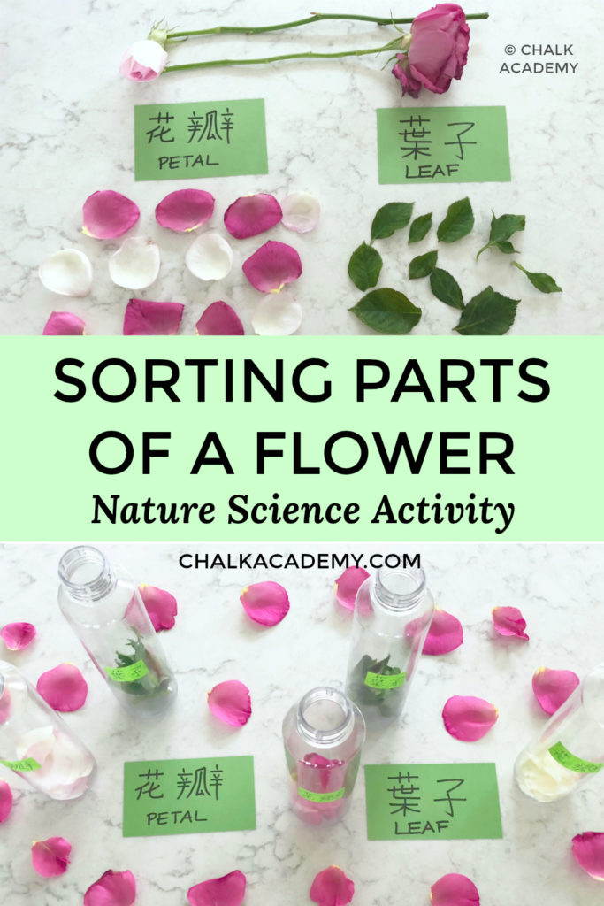 sorting parts of a flower nature science activity