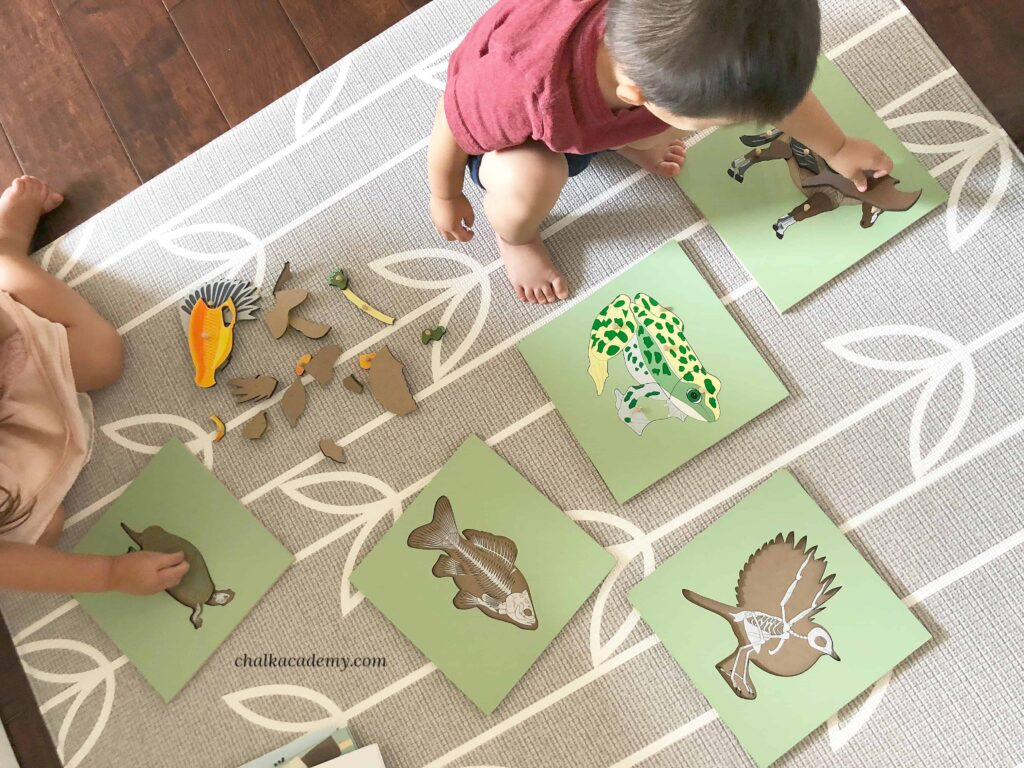 Montessori animal puzzles with skeleton