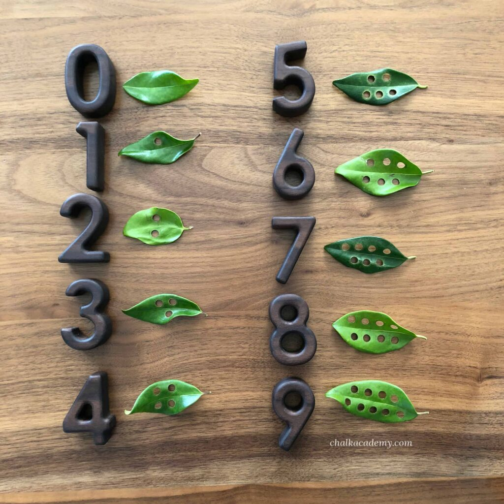 Wood number blocks and counting hole puched leaves