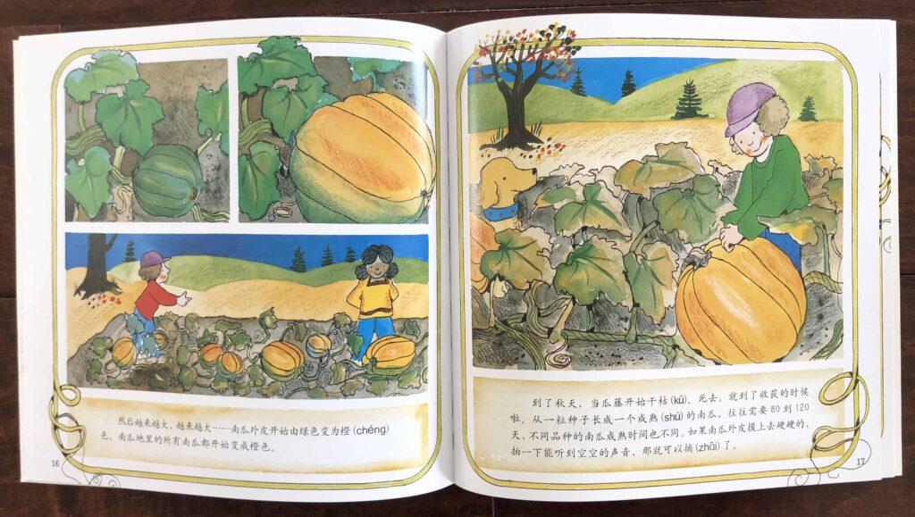 南瓜 (Pumpkin) by Gail Gibbons - Autumn and Thanksgiving Book for Kids
