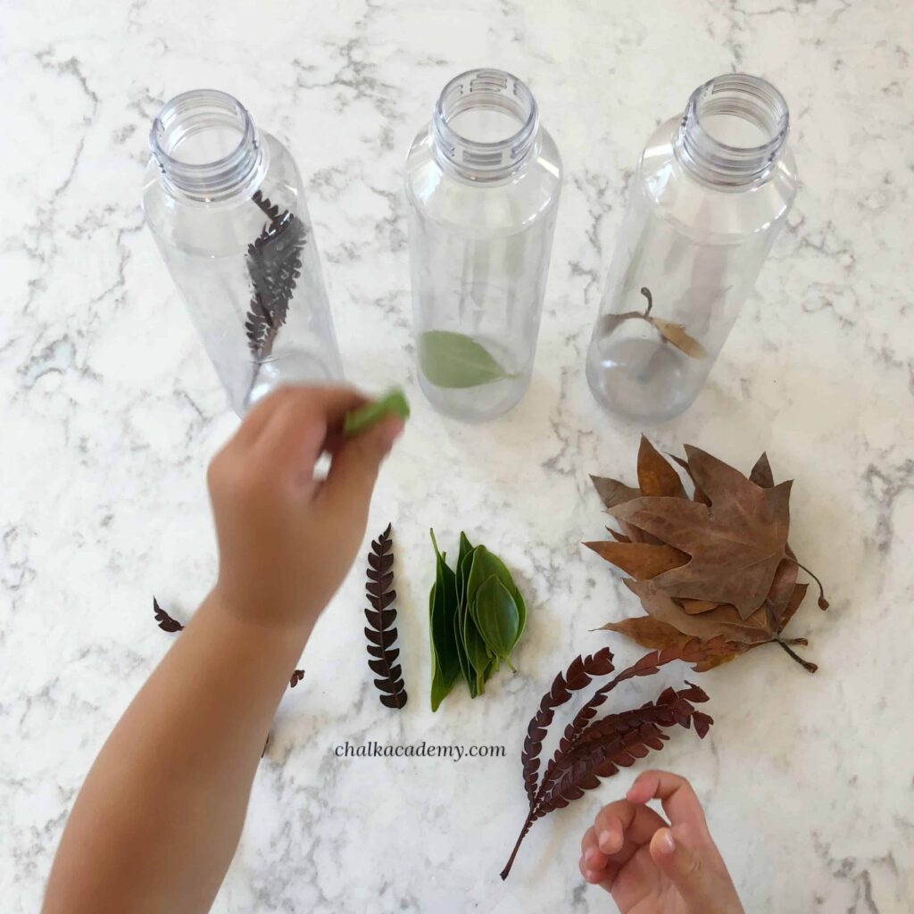 Leaf Sorting Sensory Bottles - Nature Discovery Activity for Kids!