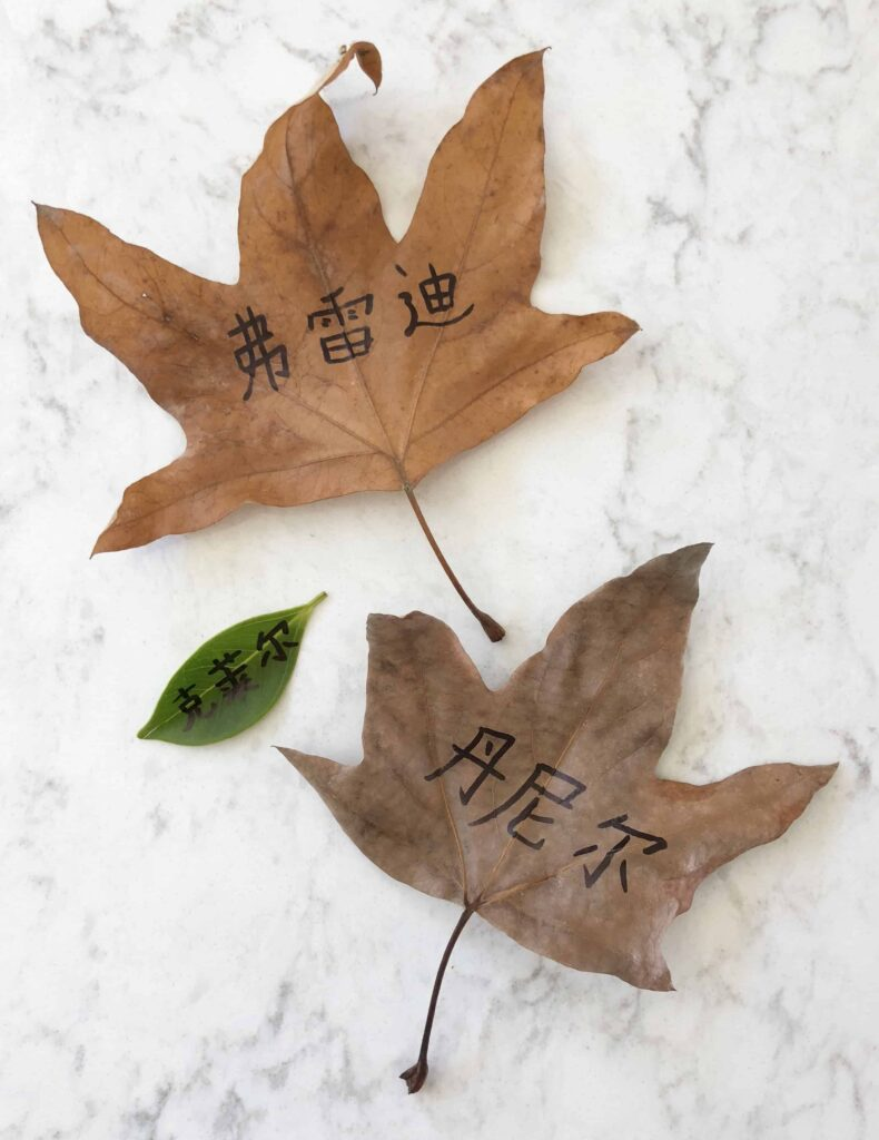 The Fall of Freddie the Leaf 一片叶子落下来 Book Review in English and Chinese - Character role play with nature leaves