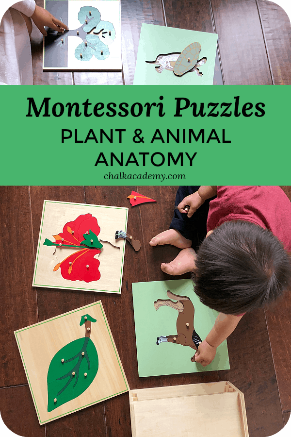 Montessori Wood Puzzles - Plant and Animal Anatomy, Parts of a horse, parts of a leaf, parts of a flower, parts of a tree, parts of a turtle, parts of a frog