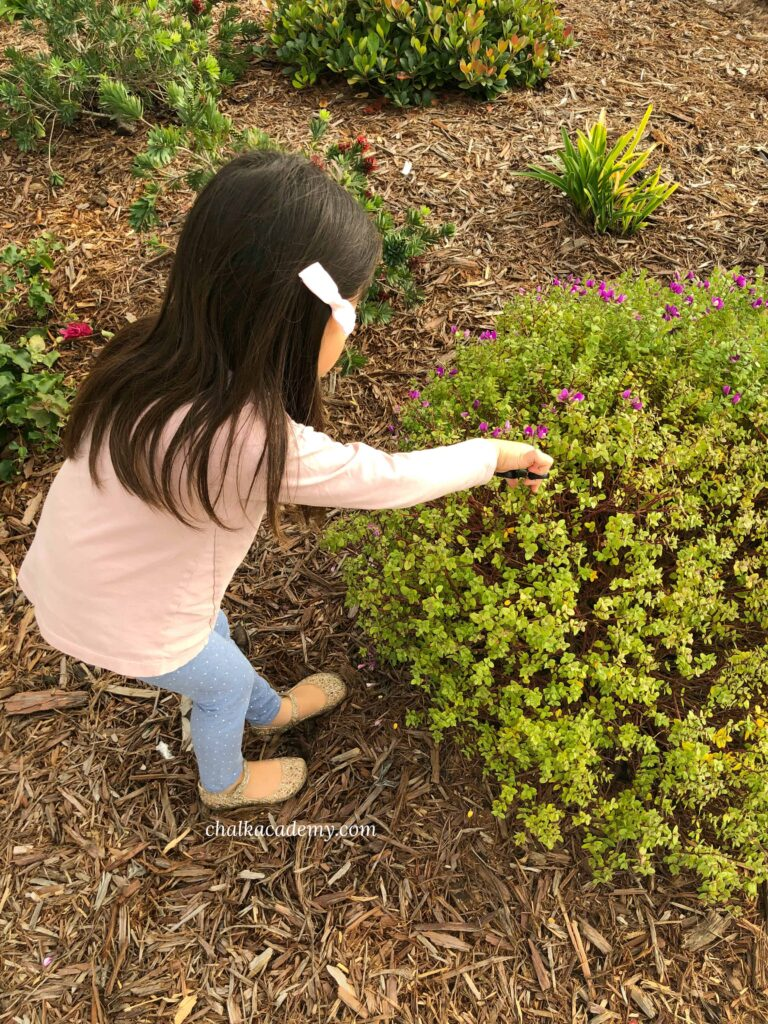 Cutting plants with scissors - fine motor skills for kids