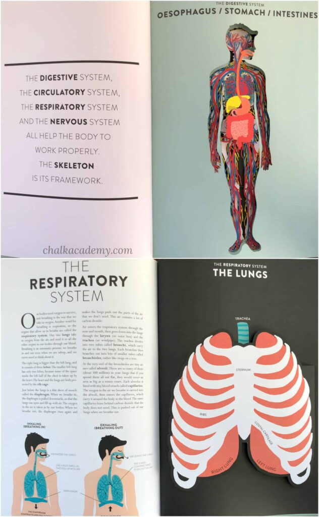 Anatomy: A Cutaway Look Inside the Human Body (Hardcover) by Jean-Claude Druvert