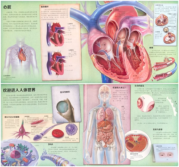 Human Anatomy 3D Pop Up Book Simplified Chinese