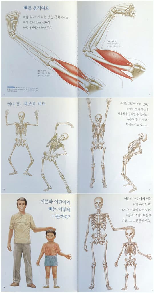 Human Anatomy Korean book skeletons: The Picture Book of Nature and Science