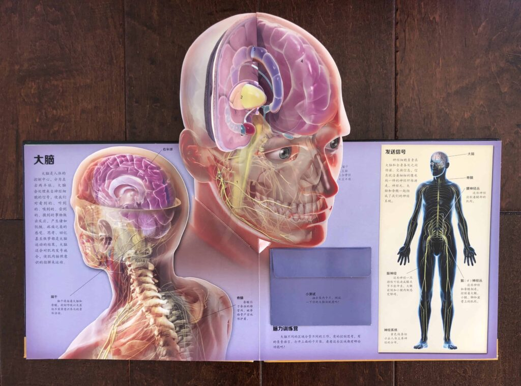 Chinese Human Anatomy Book - 3D Pop-Up