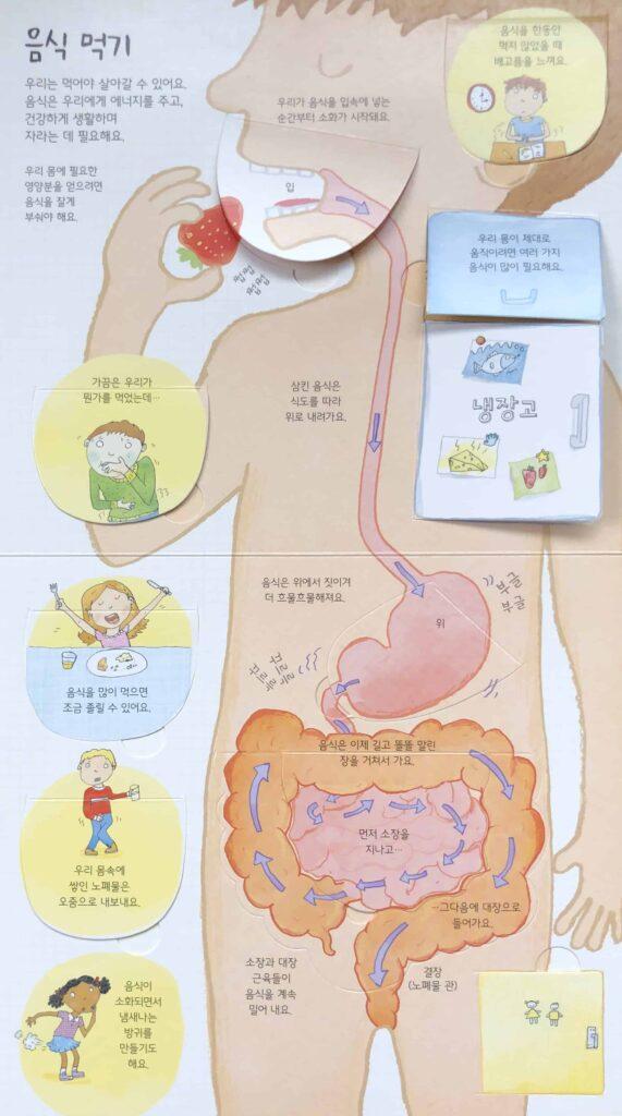 어스본요리조리 열어 보는 우리 몸 Usborne Human Anatomy Book in Korean