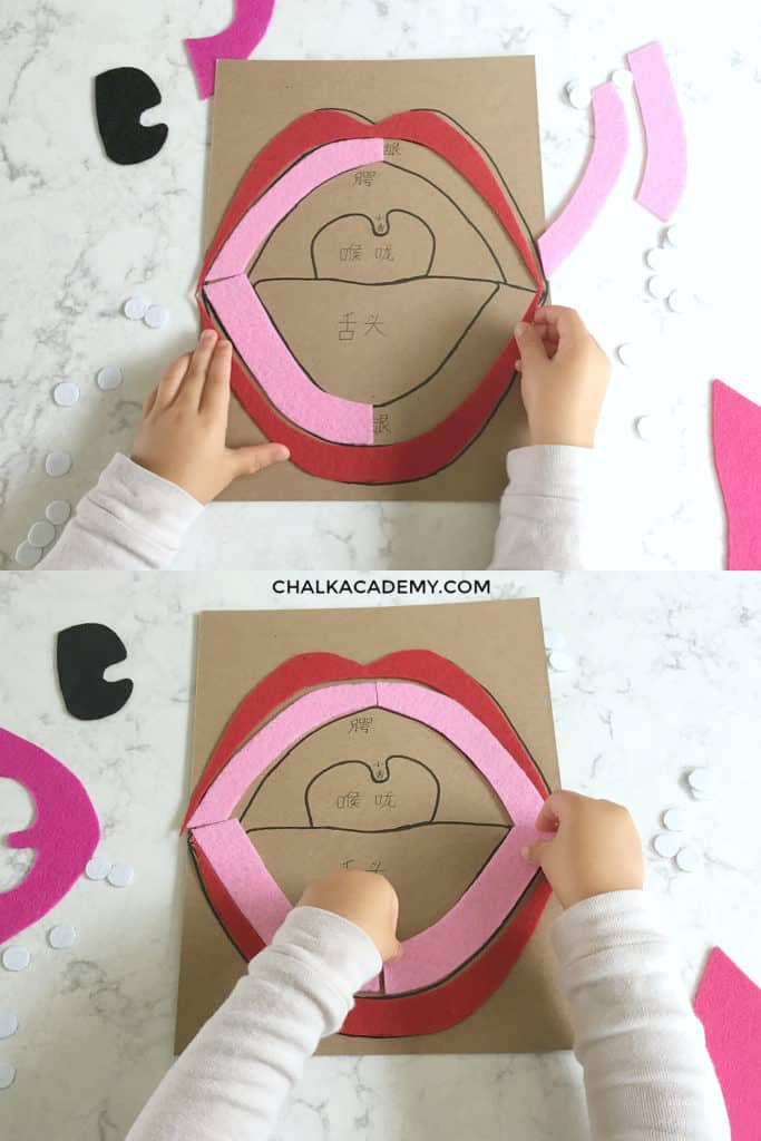 DIY MOUTH PUZZLE - LIPS AND GUMS