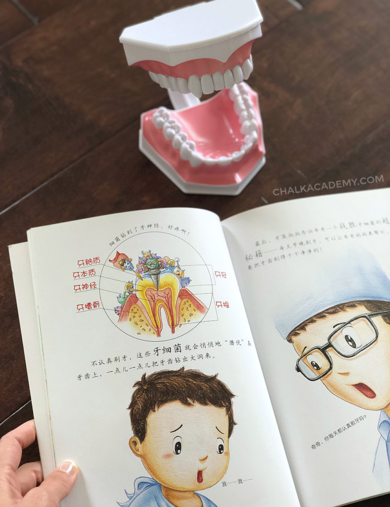 Chinese book from Health Guides 影响孩子一生的健康书 and realistic dental model