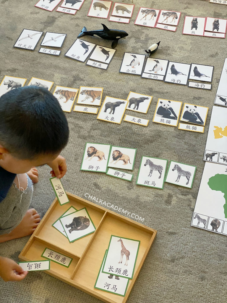 Montessori animals 3-part cards with simplified Chinese characters