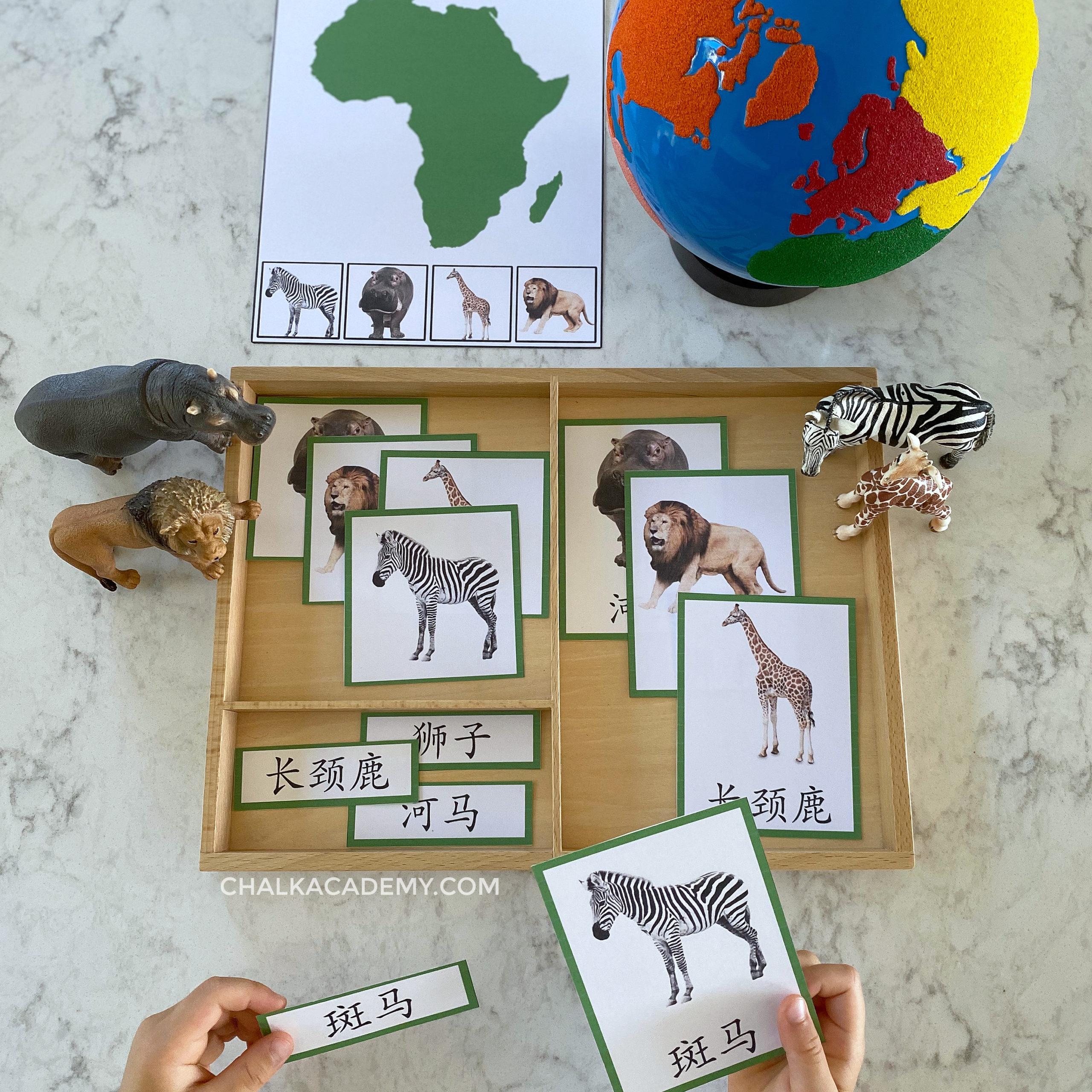 Montessori Animals And Continents Activities Chinese Korean English