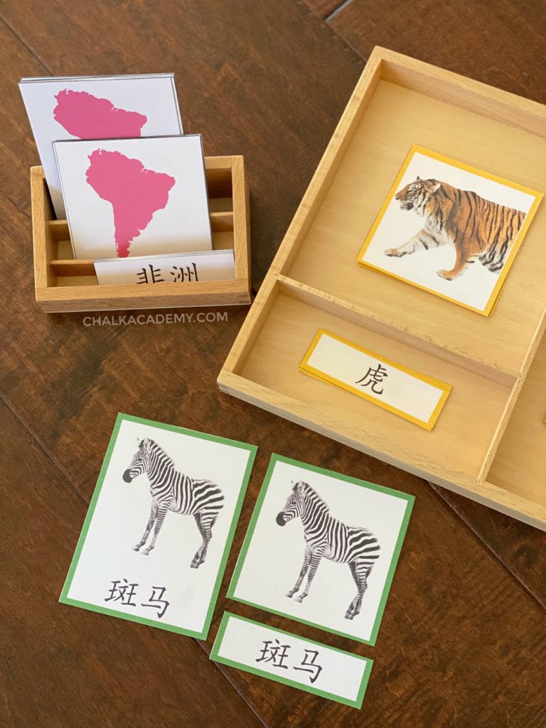Montessori continents and animals 3-part cards with simplified Chinese characters