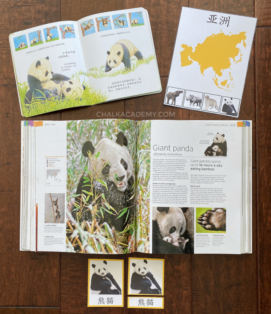 Learning about panda bears through Montessori-3 part cards and books in English, Chinese, and Korean