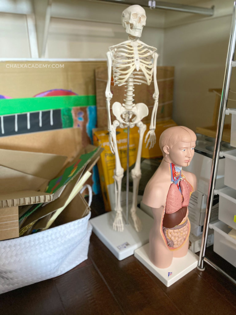 Skeleton, human anatomy model, cardboard