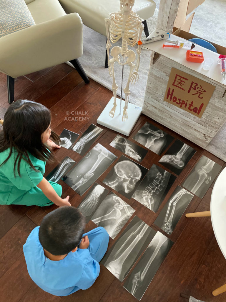 Skeletal X-ray educational science toys for kids