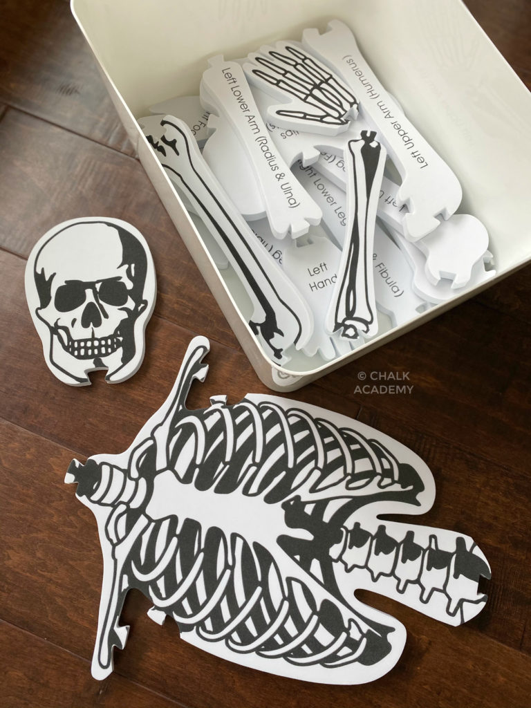 Skeletal X-ray labeled foam puzzle educational science toys for kids