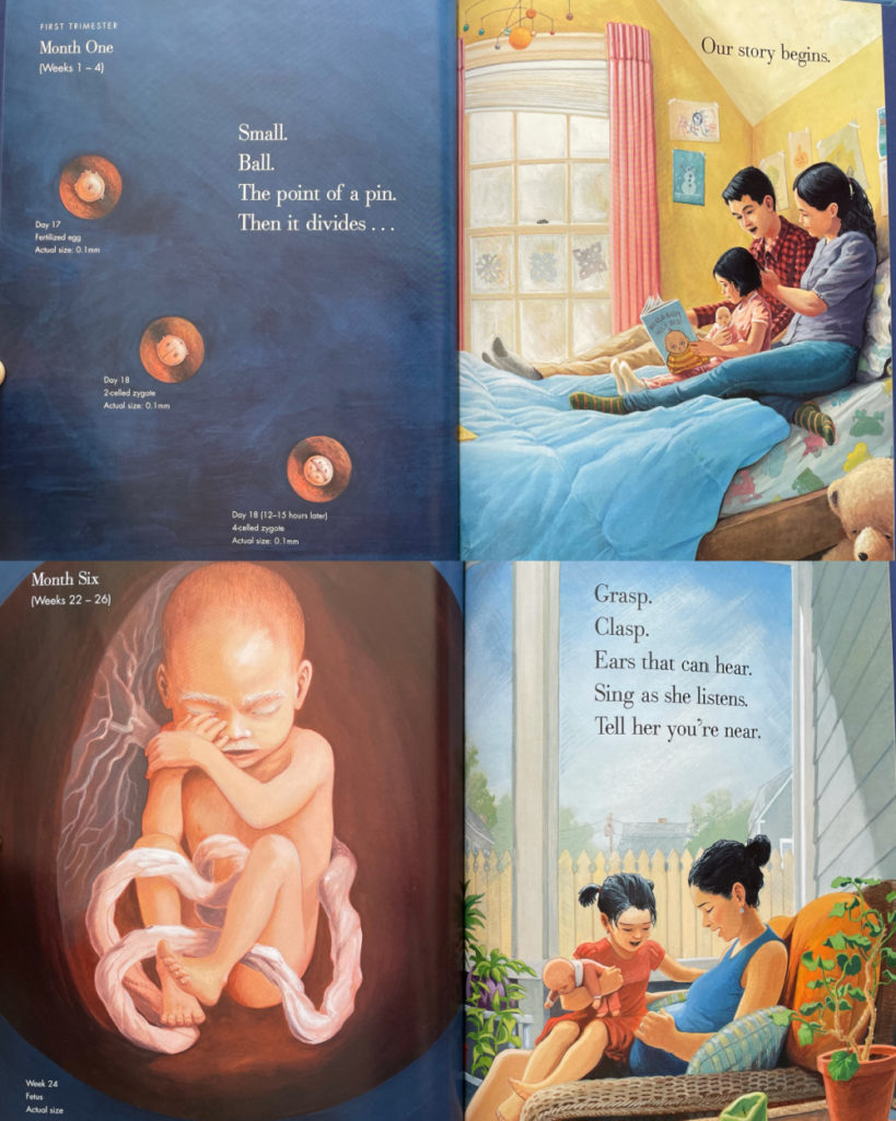 Nine Months picture book by Jason Chin - pregnancy new sibling book with realistic illustrations