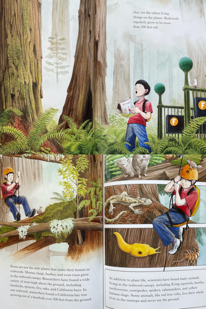 Redwoods by Jason Chin - science nature picture book with Chinese American boy